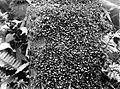 Collectie Nationaal Museum van Wereldculturen TM-10021332 De groei van plantjes op een boomstam Saba -Nederlandse Antillen fotograaf niet bekend.jpg