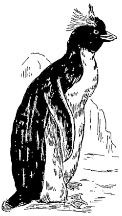 Collier's 1921 Penguin.png