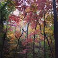 Colorful foliage at Mountain Longleaf National Wildlife Refuge.jpg