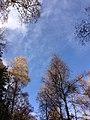 Colori D'Autunno...09-11-12 - panoramio.jpg