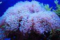 Coral (3).jpg