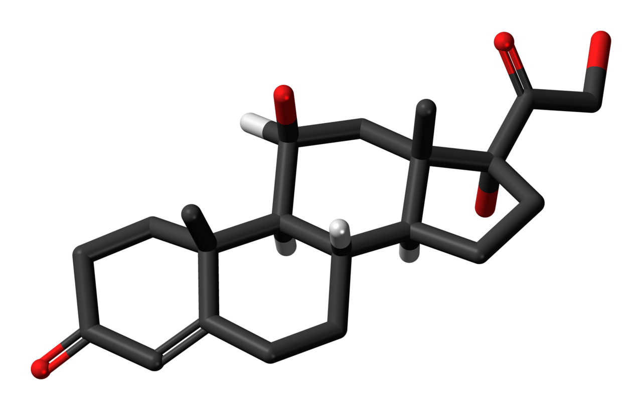 File:Cortisol-3D-skeletal-sticks.png - Wikimedia Commons