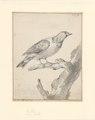 Cotinga cayana - 1710-1792 - Print - Iconographia Zoologica - Special Collections University of Amsterdam - UBA01 IZA1000732.tif
