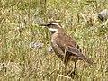Cotopaxi Nationalpark Ecuador126.JPG