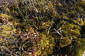 Cranesville Swamp Preserve 82.JPG