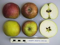 Cross section of Desseffy Arisztid, National Fruit Collection (acc. 1948-362).jpg