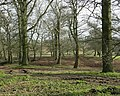 Curl's Wood - geograph.org.uk - 1227386.jpg