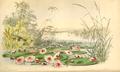 Curtis's Botanical Magazine, Plate 4275 (Volume 73, 1847).png