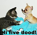 Cute cat and dog 3.jpg