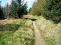 Cycle Trail in Dalbeattie Forest - geograph.org.uk - 392914.jpg