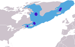 Cystophora cristata distribution.png