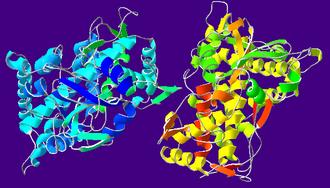 Cytochrome P450 - Cytochrome P450 Oxidase (CYP2C9)