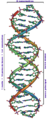 DNA Overview es.png