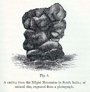 The Formation of Vegetable Mould through the Action of Worms - A casting from the Nilgiri Mountains in South India