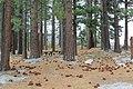 Davis Creek Park - panoramio (13).jpg