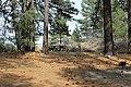 Davis Creek Park - panoramio (14).jpg