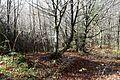Deisenhofener Forst Roemerstrasse Via Julia Lanzenhaar-1.jpg