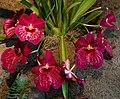 Denver Botanic Gardens 7-12 (19253608504).jpg