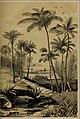Die Pflanzendecke der Erde - populäre Darstellung der Pflanzengeographie für gebildete Naturfreunde (1859) (20317954413).jpg