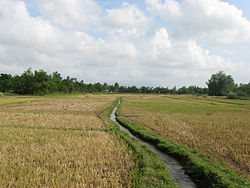 Dien Ban Field and Stream.JPG