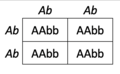 Dihybrid Punnett Square (AbAb x AbAb).png