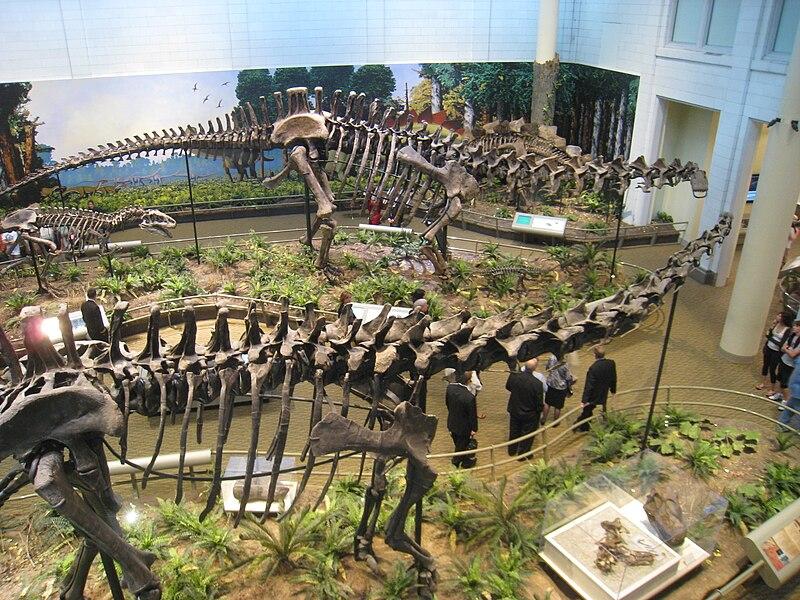 [Image: 800px-Dinos_at_Carnegie_-_IMG_0718.jpg]