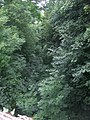 Disused railway bed at Pentre Berw - geograph.org.uk - 1440048.jpg