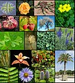 Diversity of plants image version 6.jpg