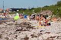 Dog beach (4739402216).jpg