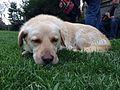 Dog in the grass.jpg