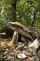 Dolmen du Pech d'Agaïo à Saint Chels.jpg