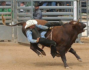 A bull rider at the 2007 Atlantic Stampede, an...