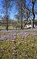 Drebacher Krokuswiesen..2H1A0059WI.jpg