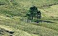 Drosgol farm - geograph.org.uk - 949883.jpg