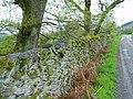Dry Stone Wall - geograph.org.uk - 170563.jpg