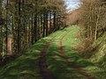 Dundoran Plantation - geograph.org.uk - 353919.jpg