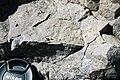 Dunham Dolomite (Lower Cambrian; Route 2 roadcut, southeast of the Lamoille River bridge, Vermont, USA) 9.jpg
