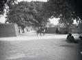ETH-BIB-Die Hauptstrasse von Maiduguri ist überschattet von mächtigen Laubbäumen-Tschadseeflug 1930-31-LBS MH02-08-0553.tif
