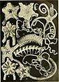 Echinodermata Ophiuroidea (1922) (20515084114).jpg