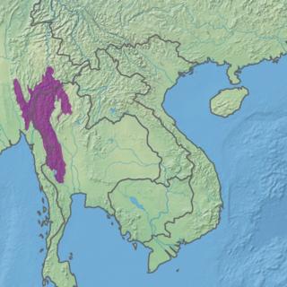 Kayah-Karen montane rain forests terrrestrial ecoregion in Myanmar and Thailand