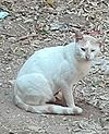 Egyptian cat000.jpg