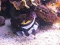 Eilat Coral World Underwater Observatory 04.jpg