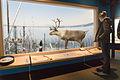 Elk - Royal Alberta Museum (23211200949).jpg