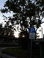 Elsbeere- Lorsbacher-Bahnhof.jpg