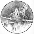 Emu volume 3 plate 12.png
