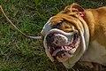 Encontro Dog Institute (41038158685).jpg