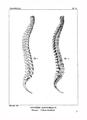 Encyclopédie méthodique - Systeme Anatomique, Pl10.png