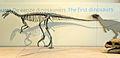 EoraptorBrussels.jpg