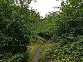 Epping Forest 20170727 112555 (49374666206).jpg