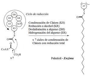 Harmonica Linea Farmacia Suplemento Dietético Natural 100